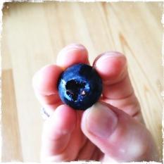 OGM..ahem OMG bluberry